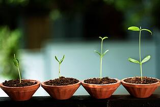 fertility wishes pic of seedlings growing