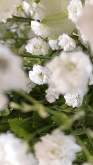 flowers to show infertility secrets