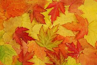fall leaves and ladies night in schedule