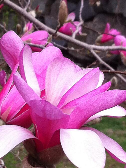 Spring Flowers Fertile World