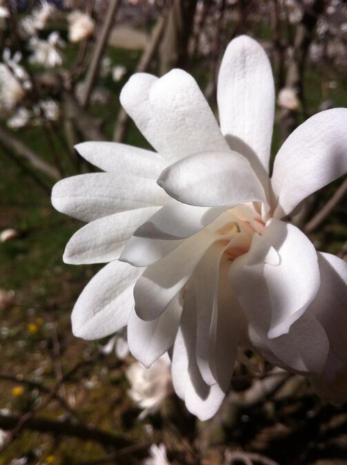 Spring Flowers   Fertile World 4