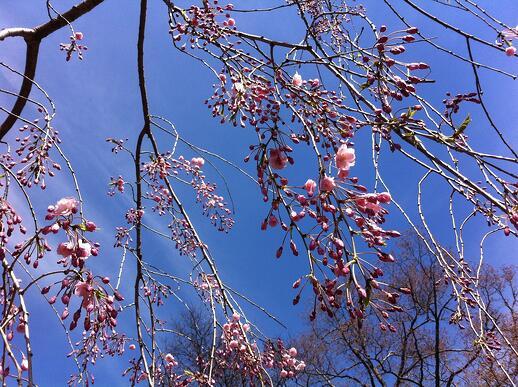 Spring Flowers   Fertile World 6