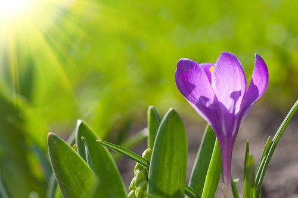 light on infertility myths