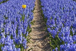 infertility chaos   turning to calm   flowers in field