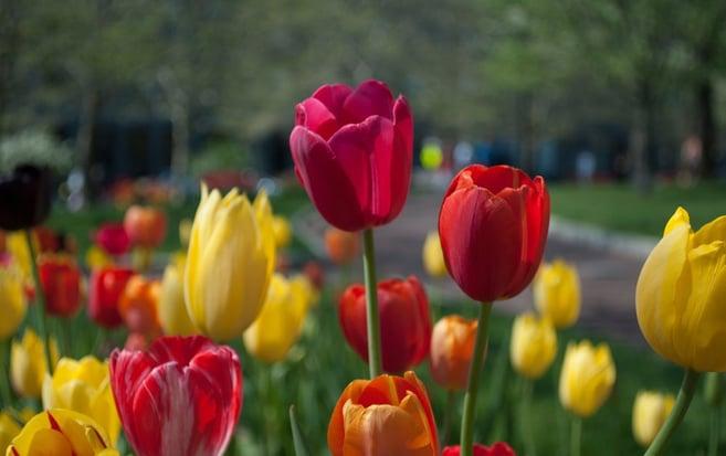 Flowers Fertile Image