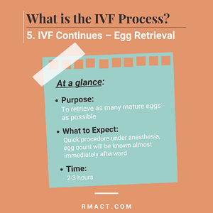 egg-retrieval-process-ivf