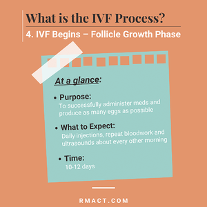 follicle-growth-phase-ivf