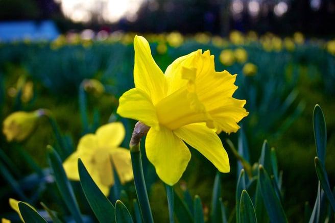 Fertile Flower