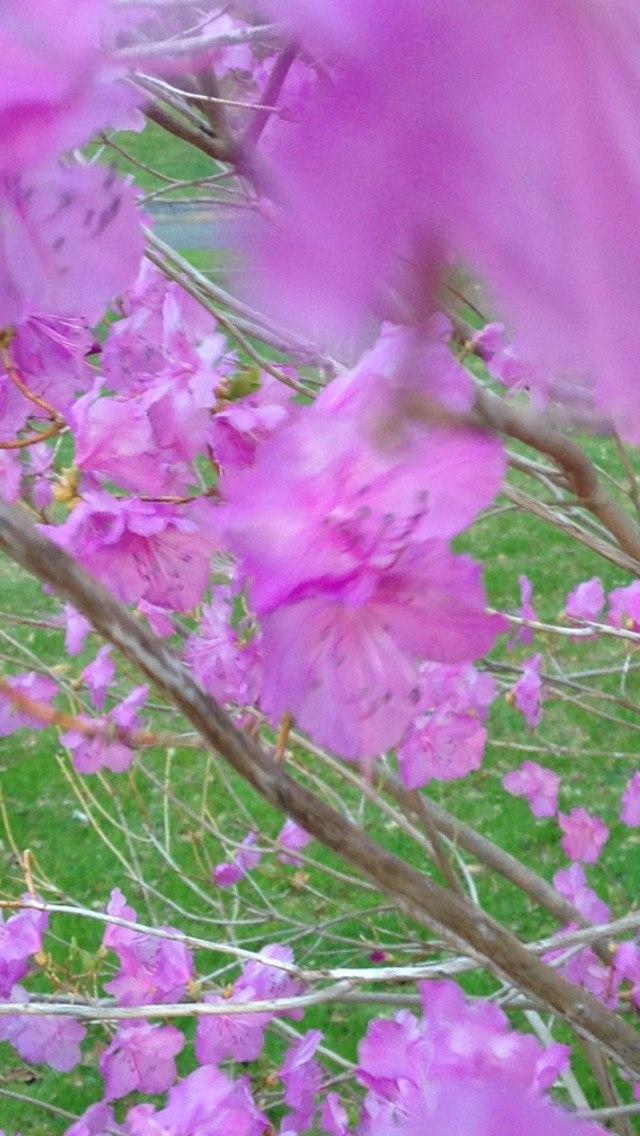 Spring Fertile Flowers