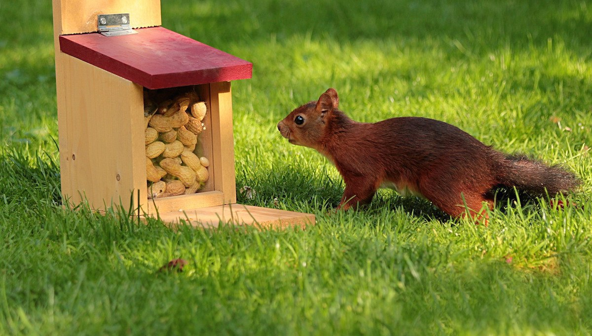 Sperm- Hoarding your Nuts? Leave it for the Squirrels