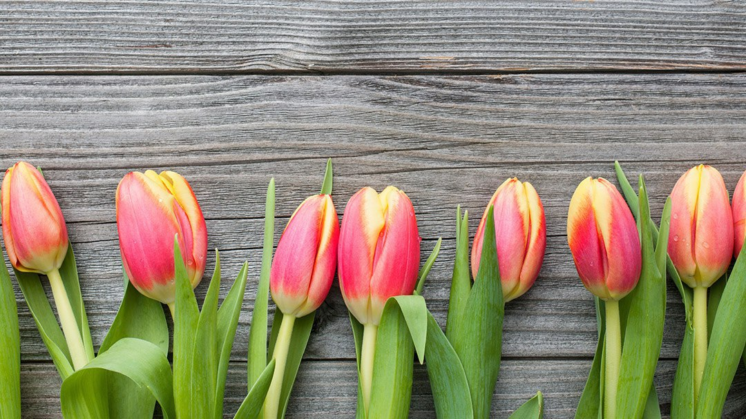 Fertile Wishes for Mother's Day
